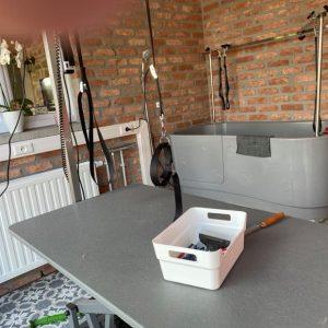 Salon de toilettage chien